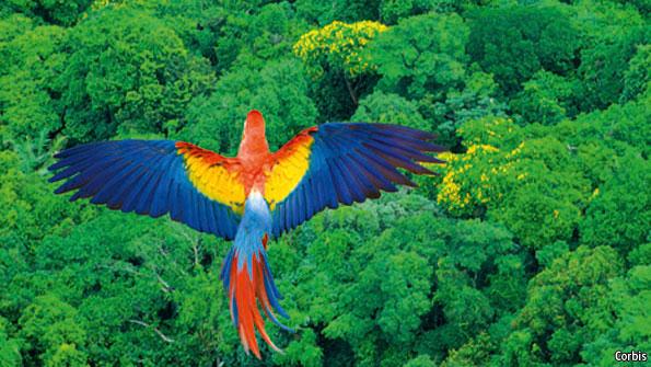 Rainforest Birds Flying Ms. Haigler's Class / ...